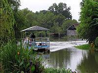 New Orleans' Cajun Bayou Tour
